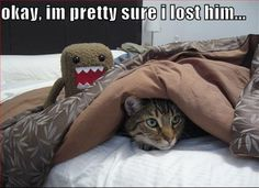 Animal humor crazy cats, i love cats, the funny, stupid funny, funny Animal Captions, Funny Captions, Animal Memes, Animal Humor, Animal Facts, Funny Animal Pictures, Funny Animals, Cute Animals, Funniest Pictures