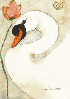 MUTE SWAN  aceo watercolor giclee PRINT  by Whitedogwatercolours