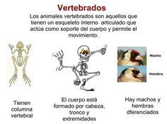 90 mejores imágenes de Vertebrados   Vertebrados, Animales
