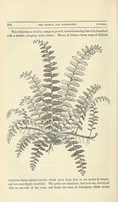 free vintage botanical drawings