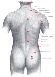 point de Knap du dos - Ostéopathe Castres Le Point, Chef Jackets, Sports, Danger, Index, Recherche Google, Nose Bleeds, Bad Posture, Chinese Medicine