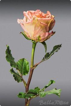 Флористика искусственная Лепка Роза из полимерной глины Глина фото 1