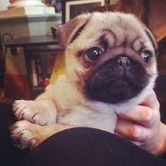 bobdoom:    metam0rphosis:    Cutest thing in the world, I'm gonna cry    Holy crap.