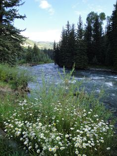 Bogan Flats campground, Marble, CO