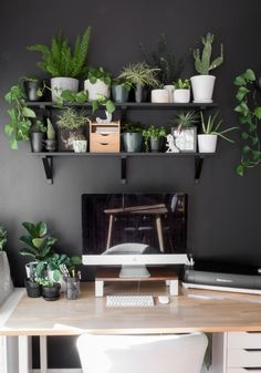 Golden pothos plants are easy-to-grow, beautiful plants for your home. Learn how to propagate golden pothos plants from cuttings. Room With Plants, House Plants, Golden Pothos Plant, Plant Design, Design Design, Design Ideas, Garden Design, Modern Design, Vintage Industrial Furniture