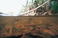 Takashi Amano amazon underwater photographs