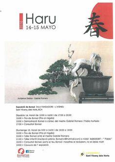 Haru 2016.  Foto del Facebook de Bonsai Club Sant Vicenç.  #Bonsai #BonsaiTree #盆栽 #BonsaiLife #Бонсай #BonsaiExhibition #BonsaiWork #盆景 #Penjing #Bonsaï