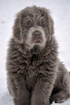 I wanna hug this lovely dog!