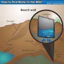 survival techniques in the wild - Google Search