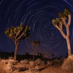 10 Glowing Trails to Hike After Dark Joshua Tree National Park, California Joshua Tree National Park, National Parks, California Tourist Attractions, Great Places, Places To Visit, Bioluminescent Bay, Desert Life, Desert Art, After Dark