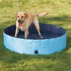 Splash About Heavy Duty Dog Pool #PoshPuppy #PoshPuppySummer #PinittoWinIt