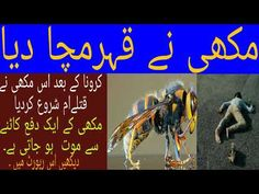 One Bee One attack and Person gose die Types Of Bees, Cricket Videos, Drama, Public, Tv, News, Youtube, Movie Posters