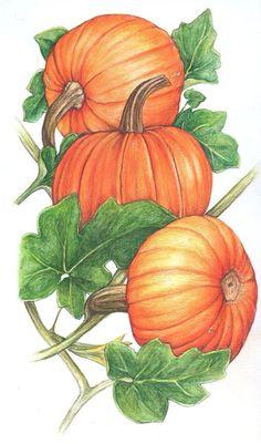 pumpkins on the vine ~ Mis Laminas para Decoupage Autumn Painting, China Painting, Autumn Art, Pumpkin Vine, Pumpkin Art, Giant Pumpkin, Fall Clip Art, Fall Cards, Painting Art