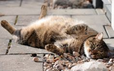 We all have a little lazy spark in us and so do animals, although they do say cats are the laziest of them all.