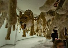 When art meets taxidermy - Wall to Watch