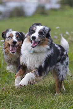 Nando and Muffin Friendship, Muffin, Smile, Dogs, Animals, Animales, Animaux, Pet Dogs, Muffins