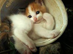 Geralidade: Gato confortável...