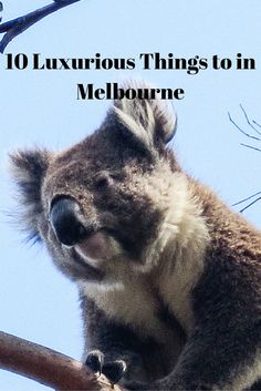 My Top Ten Things to Do in Melbourne, Australia