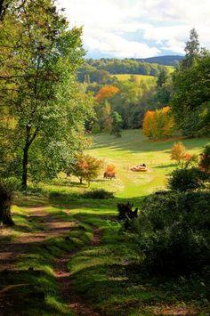 Winkworth Arboretum, England
