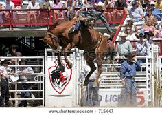 World Champion Saddle Bronc rider, Dan Mortensen, makes a successful ride at the 2005 Cheyenne Frontier Days rodeo.