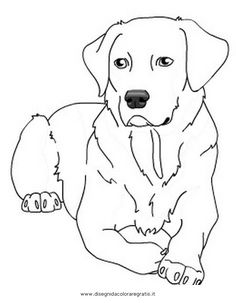 find this pin and more on all things hugo labrador retriever coloring page