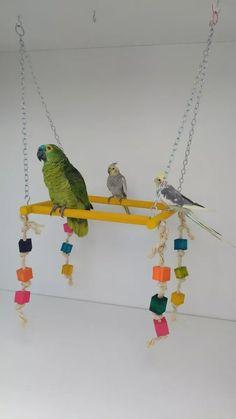 balanço poleiro para papagaio encanto das aves