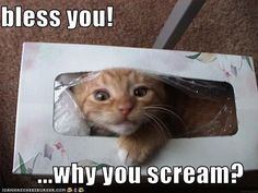 bless you! ...why you scream?