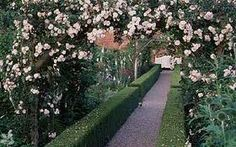 rose adelaide d'orleans mottisfont abbey - Google Search