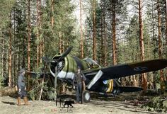 A Finnish Brewster Buffalo 239 fighter (BW-352) 24th June 1941.