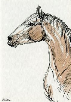 Horse Drawings, Pencil Art Drawings, Animal Drawings, Horse Head Drawing, Horse Pencil Drawing, Animal Sketches, Art Sketches, Sketches Of Horses, Horse Artwork