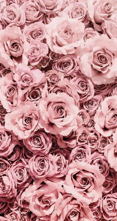 Wallpaper Iphone Aesthetic - simple and aesthetic pretty pink rose flower phone wallpaper for iphone and andr. - Wildas Wallpaper World