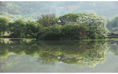 풍경갤러리 - 이팝나무와 위양지 River, Landscape, Calming, Outdoor, South Korea, Outdoors, Scenery, Outdoor Games, The Great Outdoors