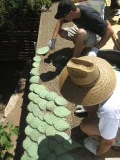 I admit I dislike cactus as a planting in a yard. But, I think I could handle a roof shingled in them. Very interesting.