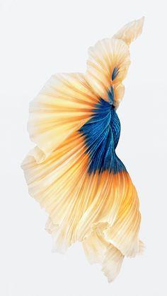 iPhone 6s los pescados del oro del papel pintado