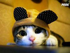 Chaton cute