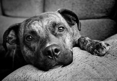 black and white photography - Google Search