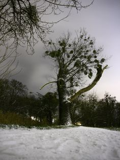 actually taken at night, lying in the snow