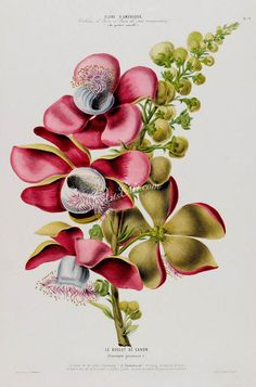 flowers-18037 - couroupita guianensis flowering branch of cannonball deciduous tree red pink flowers printable vintage print picture image           data-share-from=listing        >           <span class=etsy-icon
