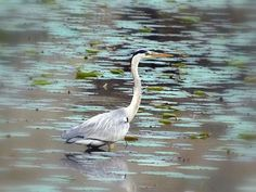 Explore Nature in Bangalore's Lalbagh on a Bird Walk   Padhaaro