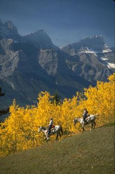 Horse riding near Canmore in the Canadian Rockies....repinned with thanks by DressageWaikato.co.nz....