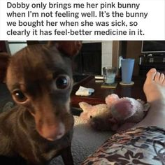 One of the Best collections of funny animal pictures,Cute funny animals, Funniest animals you'll see all day. Just look Funny Web Zone Best Animal Pictures Picdump of The Day 30 that will make you smile 21 funny animal pics. Animal Jokes, Funny Animal Memes, Dog Memes, Funny Animal Pictures, Funny Dogs, Funny Memes, Meme Meme, Hilarious Pictures, Funniest Memes
