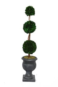 Laura Ashley 44 Triple Ball Natural Preserved Boxwood Arrangement with Planter *** Read more reviews of the product by visiting the link on the image.