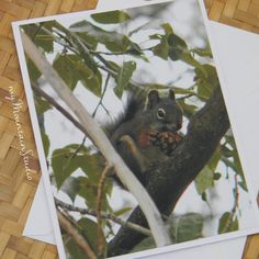 Squirrel with Pinecone Photo Note Card - Wildlife Nature Photography Montana - myMountainStudio
