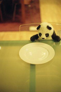 panda alone