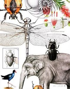 Gallery of Diversity - examples of the work produced by the Newcastle University Bachelor of Natural History Illustration students