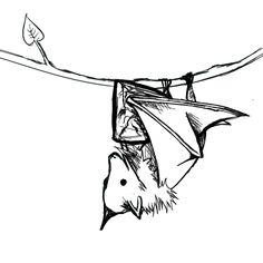 Imgs For > Vampire Bats Drawings