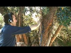 DIEGO STOCCO PLAYS A TREE:   http://www.youtube.com/watch?v=fY-ZoVMwGKM&feature=player_embedded#!
