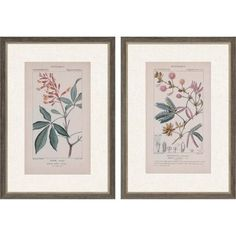 The Paragon Decor Botanique in Pink II Wall Art - Set of 2 is modeled after vintage field guide pages. This floral set utilizes giclee printing to showcase every intricate detail. Each print includes white matting and a distressed gray frame. Hanging Wall Art, Wall Art Sets, Metal Wall Art, Canvas Wall Art, Painting Frames, Painting Prints, Wall Art Prints, Framed Prints, Framed Wall