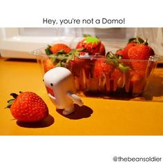 Domo and strawberry
