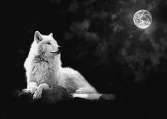 "Wolf is the Grand Teacher. Wolf is the sage, who after many winters upon the sacred path and seeking the ways of wisdom, returns to share new knowledge with the tribe. Wolf is both the radical and the traditional in the same breath. When the Wolf walks by you - you will remember."" - Robert Ghost Wolf"